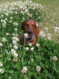 my dog in the grass